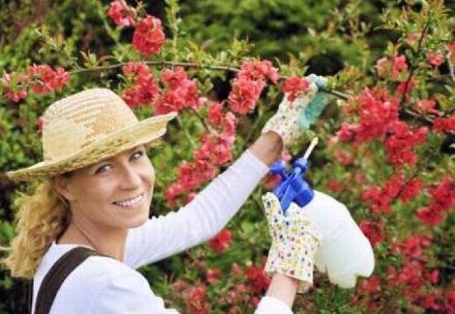 Fungicide eficiente pentru gradina