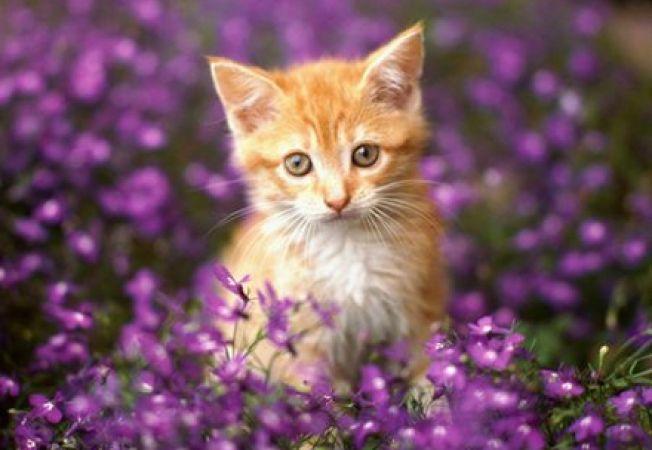 Sfaturi pentru ingrijirea pisicii vara