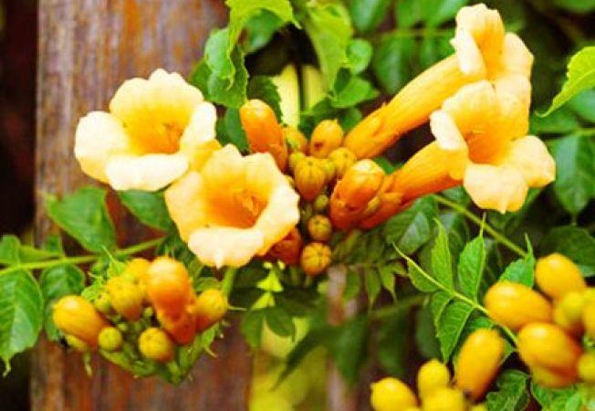 De ce nu infloresc plantele tale