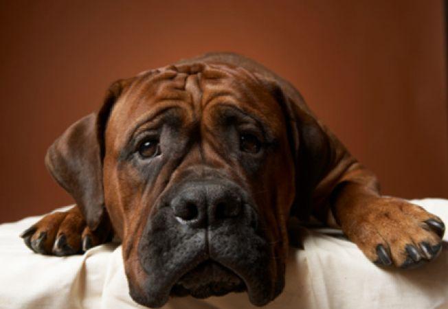 Depresia la caini - simptome, cauze, tratament