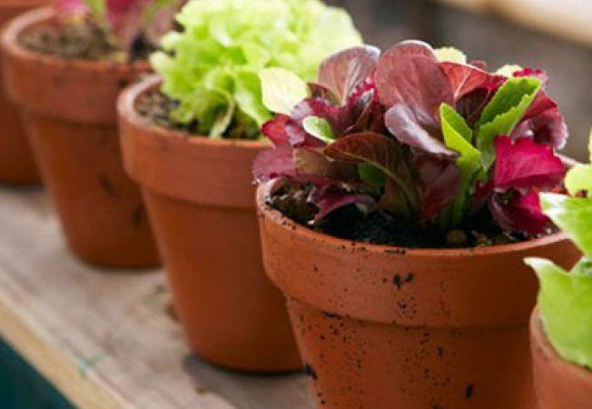 Cum ingrijesti plantele dupa concediu