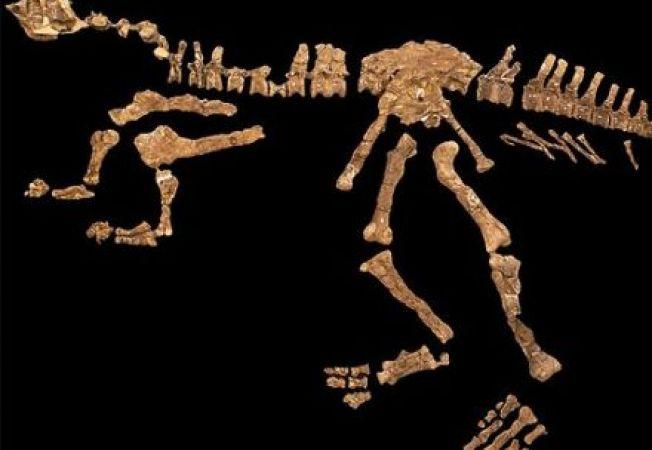 Specie noua de dinozaur, descoperita in Argentina