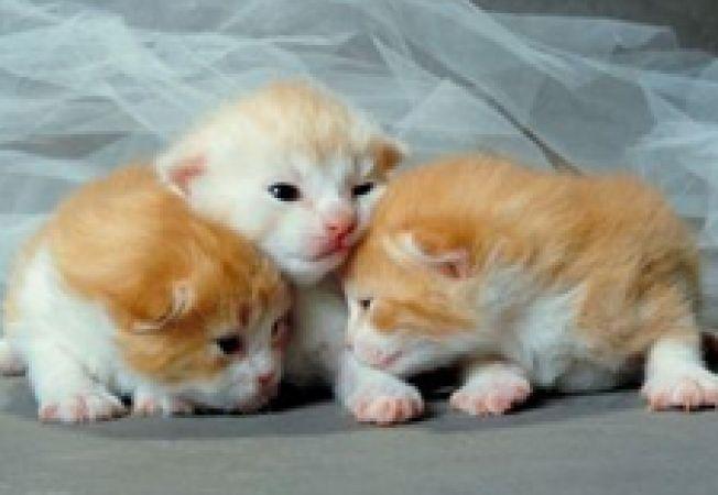 Ingrijirea puiului de pisica