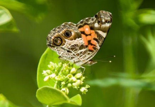 Biodiversitatea in gradina