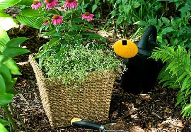 Ajuta-ti plantele sa treaca cu bine peste vara
