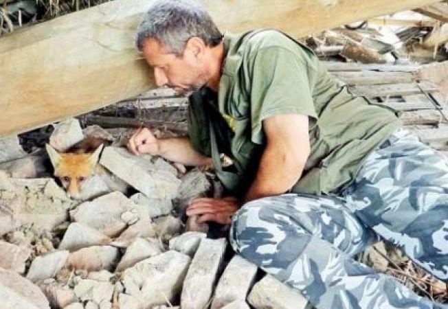 Un italian si-a riscat viata pentru a salva o vulpe de sub ruine