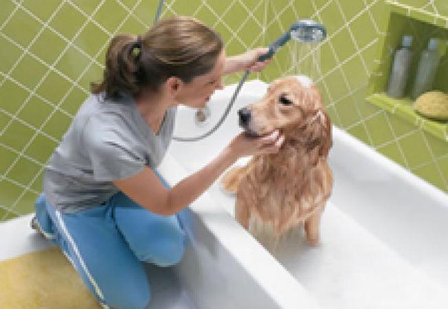 Cainele tau are nevoie de o baie? Cum sa iti dai seama