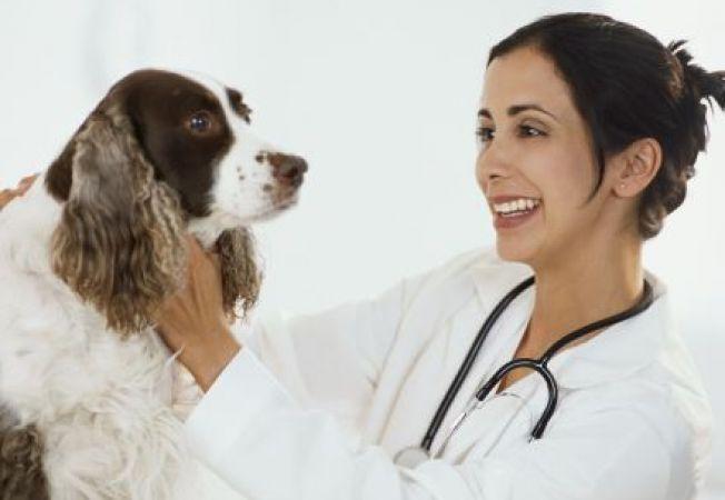 Infectia cu MRSA (stafilococ auriu meticilino-rezistent) la caini.