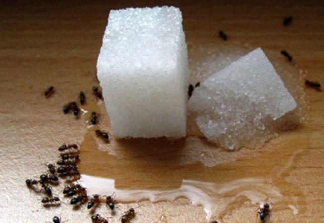 Solutii bio pentru a scapa de furnicile din casa