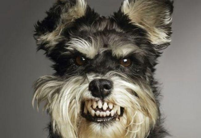 Studiu: Agresivitatea brusca si necontrolata a cainilor, cauzata de dureri ascunse