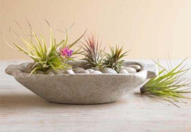 Plante care nu au nevoie de sol pentru a creste
