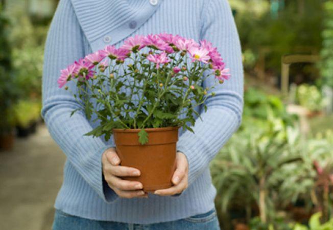 Cele mai intalnite greseli in achizitionarea de noi plante