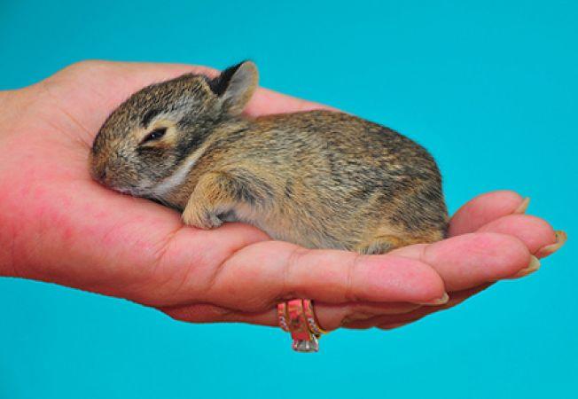 Ingrijirea si hranirea unui pui de iepure