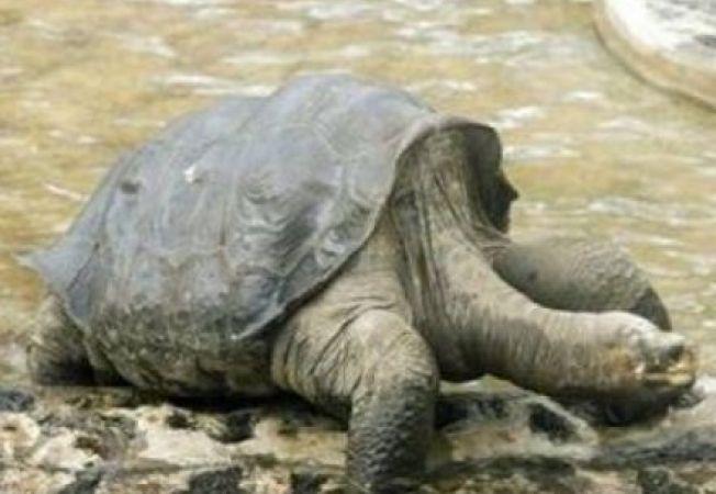 A murit George, ultimul exemplar din specia de broaste testoase gigant
