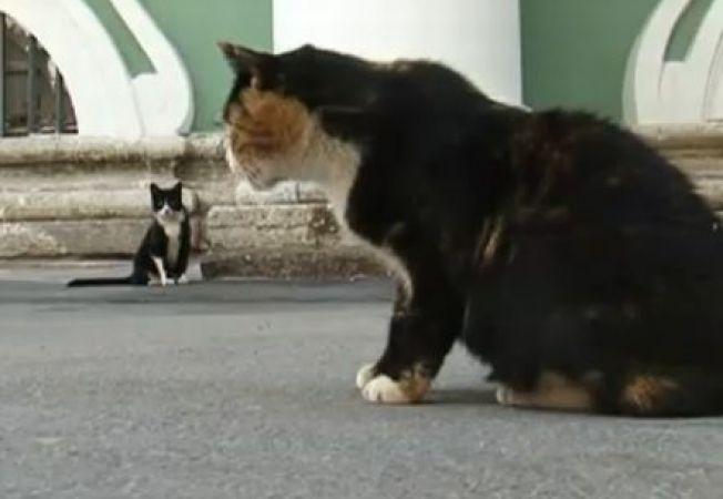 Pisicile, paznici pentru un muzeu de arta din Rusia (VIDEO)