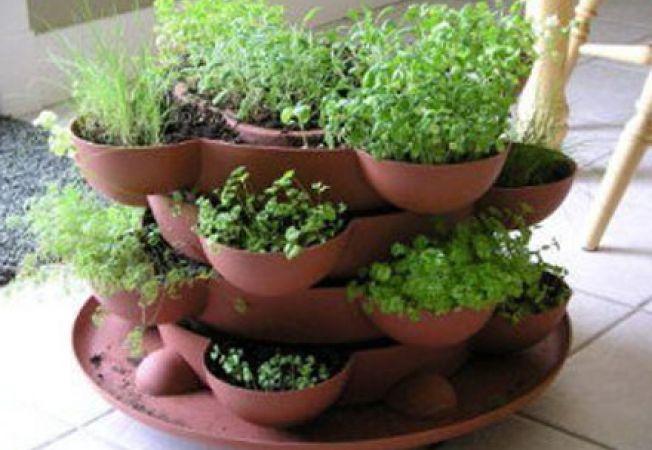 Cresterea plantelor aromatice in gradina: intre estetic si functional
