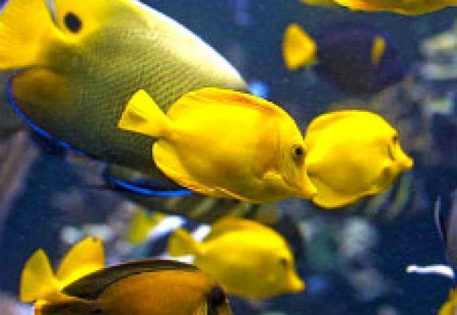Suprapopularea acvariului - efecte negative