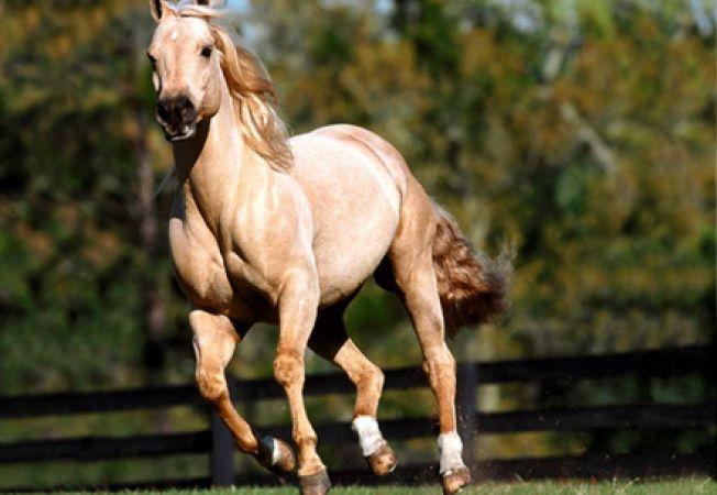 Reguli pentru ingrijirea cailor in perioada de vara