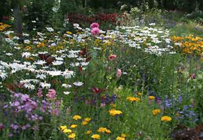 Ingrijirea florilor de gradina in luna iulie