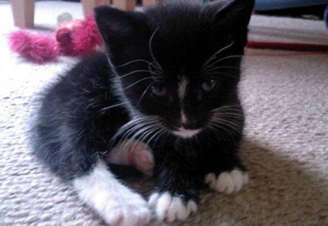 O pisica a salvat viata stapanei sale