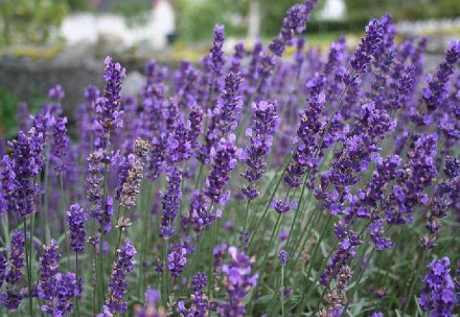 5 plante decorative foarte rezistente la seceta