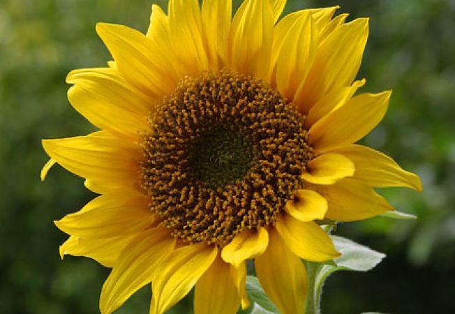 Ingrijiri pentru florile specifice lunii august