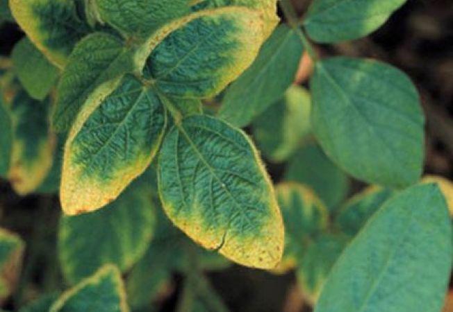 Influenta potasiului asupra plantelor de gradina