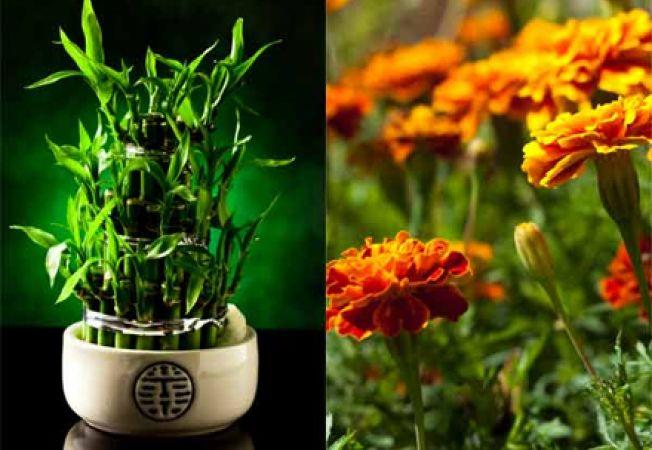 5 plante care se dezvolta rapid