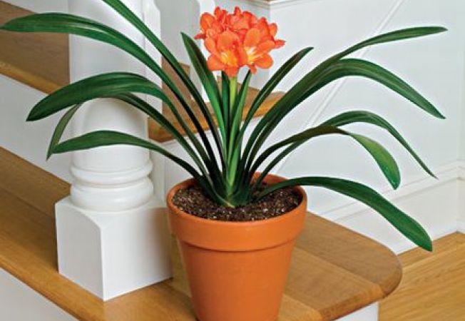 5 plante ideale pentru cultivarea in apartament - Piante grasse da interno poca luce ...