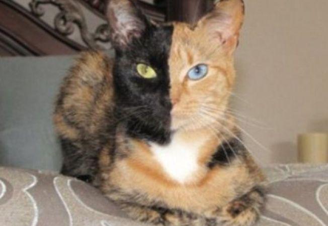 Fa cunostinta cu pisica care are doua fete... la propriu! (VIDEO)