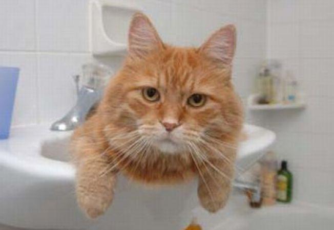 5 trucuri pentru a face baita pisicii mai usoara