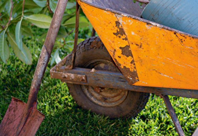 10 sfaturi de toamna pentru gradina ta