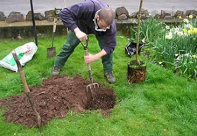 Conditii esentiale pentru plantarea unui pom fructifer