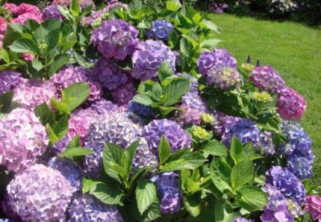 Arbusti cu flori frumoase pentru fiecare anotimp