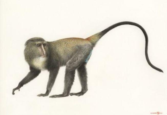 Cercetatorii au decoperit o noua specie de maimuta