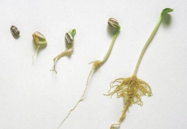 Cat timp sunt viabile semintele?