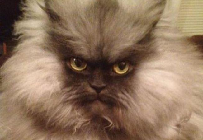 Vezi cum arata cea mai suparata pisica din lume!