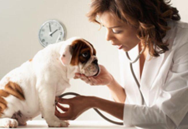 Cabinete veterinare in Oradea