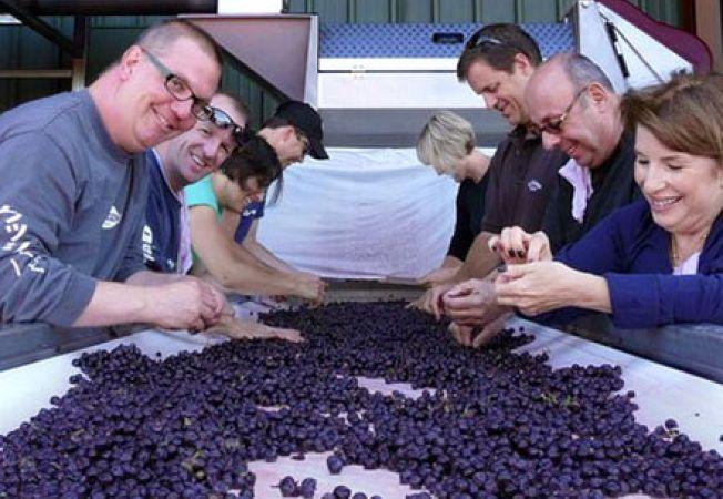 Cum sa faci un vin de calitate