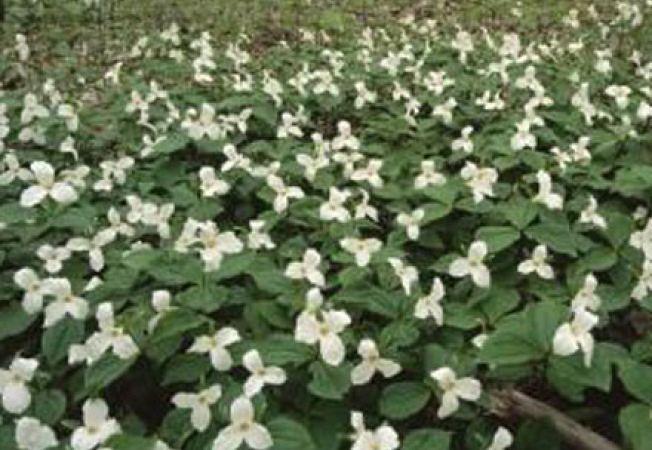 4 lucruri pe care sa le cunosti despre plantele monocotiledonate