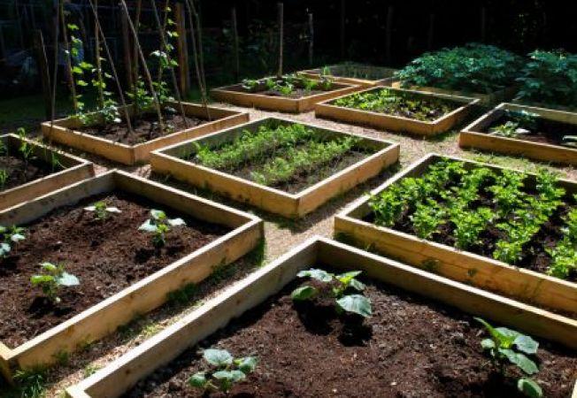 Avantajele cultivarii pe un strat inaltat