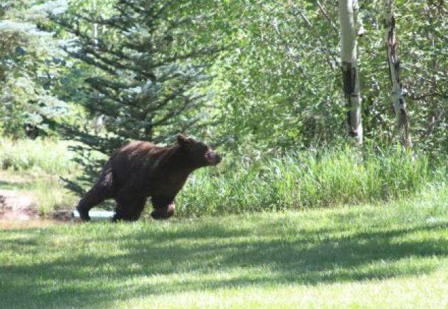 Iata cum a scapat o femeie de ursul de pe veranda casei!