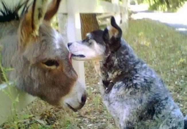 Joi, 4 octombrie se sarbatoreste Ziua Internationala a Animalelor