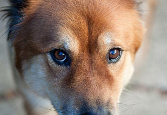 Sanatatea ochilor la caini - cum ai grija de ochii cainelui tau