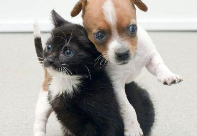 Iata cum arata o relatie de prietenie adevarata! O catelusa si o pisica se iubesc neconditionat