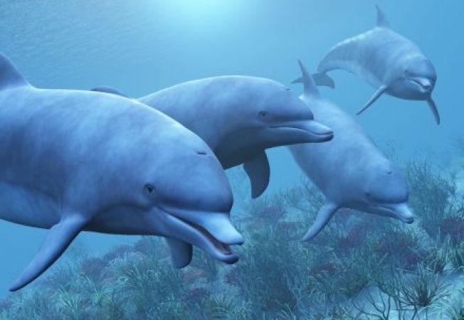 Cercetatorii au descoperit cum pot rezista delfinii treji timp de doua saptamani