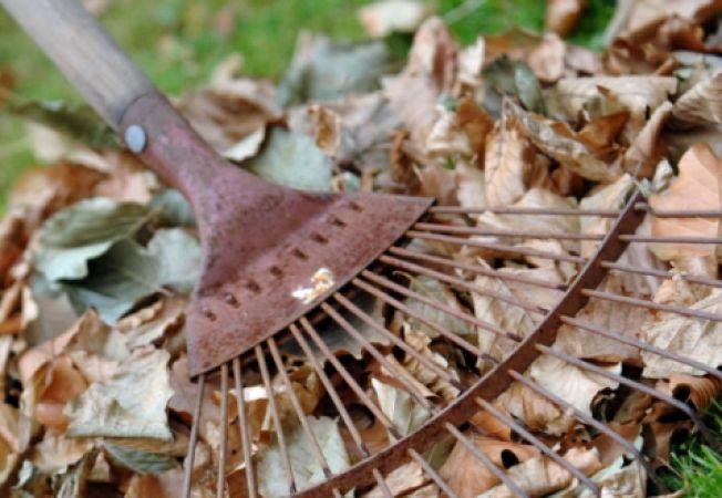 Cum sa realizezi compost din frunzele de toamna