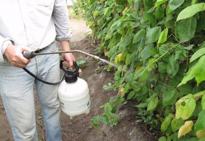 Insecticide naturale pentru gradina de legume