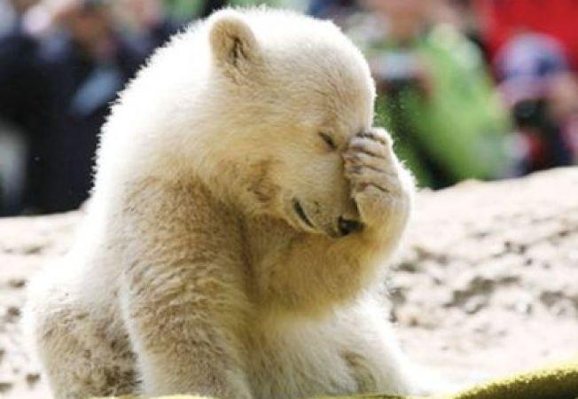 Celebrul urs polar Knut are o statuie la Berlin