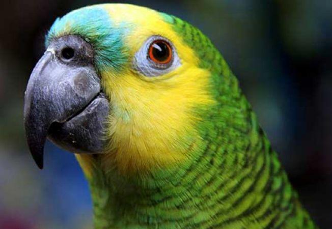 Papagalul tau musca? Iata cum il dezveti
